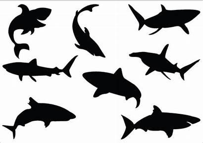 Shark Silhouette Ocean Clip Clipart Vector Fin