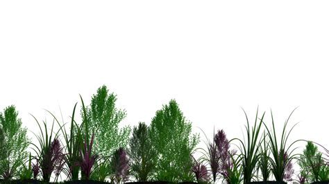 Plants PNG Transparent Free Images   PNG Only