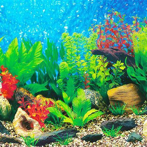 aquarium background paper hd picture   dimensional