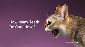 How Many Teeth Do Cats Have
