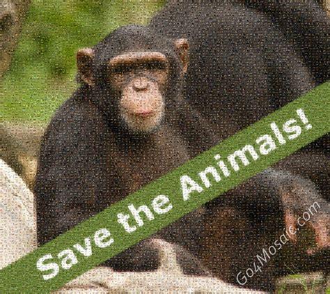 Go4mosaic Blog   Save the Animals!