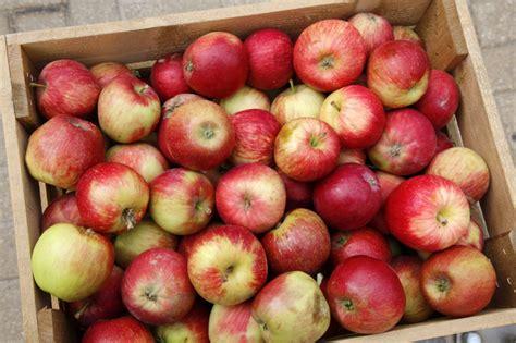 3 iemesli, kādēļ ābols ir super-auglis - Praktiski - nra.lv