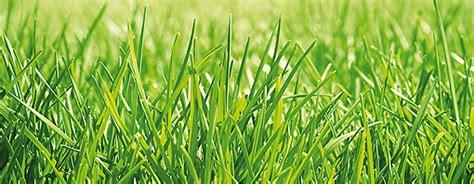 Pflege Der Grundstücksgrenze Unkraut by Rasen Pflegen Unkraut Awesome Hier Hat Das Moos Schon