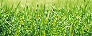 Rasen Wächst Nicht : unkraut im rasen was hilft schaeferbrueckes webseite ~ Eleganceandgraceweddings.com Haus und Dekorationen