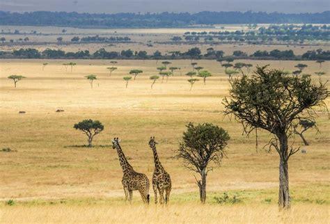 idee deco chambre romantique tableau girafe toile imprimée animaux de la savane