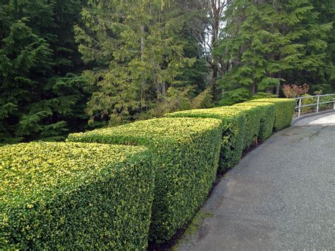 persnickety landscaping persnickety lawn and landscaping lawn and landscaping services for western washington