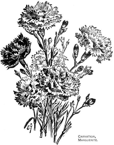 108 best Flower drawings images on Pinterest
