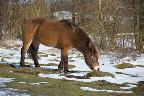 horse endangered breeds commonly today conclusion