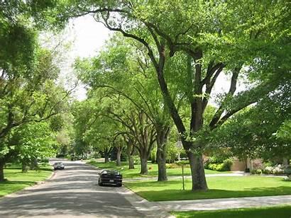 Trees Sacramento Tree Neighborhood Foundation Neighborhoods Park