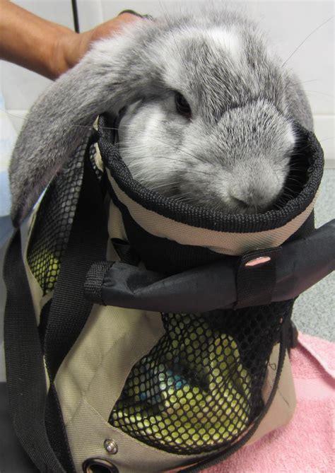 pr 233 sentation du lapin fiches conseils
