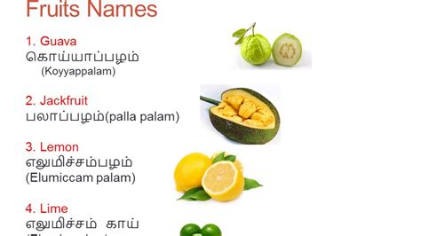 learn tamil  english fruits names youtube