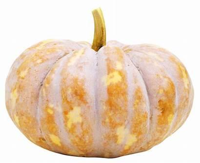 Pumpkin Purepng Squash