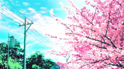 Anime Cherry Blossom Wallpaper - pink cherry blossom wallpaper 62 images