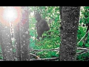 Another Proof of Bigfoot: Actual Sasquatch/Bigfoot Finally ...
