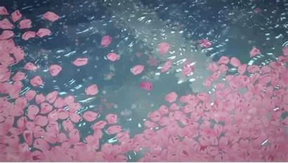 Rain Water Pretty Petals Flowers Words Night