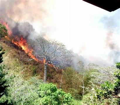 Dry Season Trinidad Fires Bush During Feature