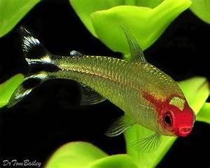 1000+ images about My virtual aquarium on Pinterest ...