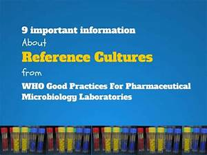 Importan Information About Reference Culture From WHO Good ...