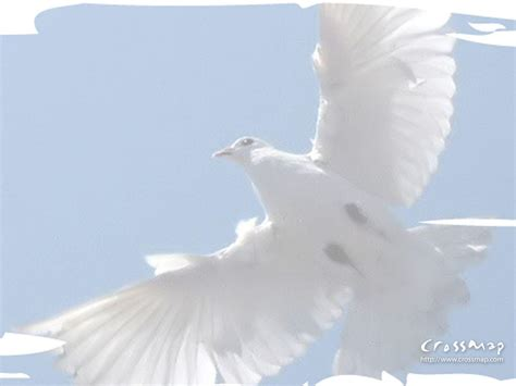 holy spirit wallpapers wallpaper cave