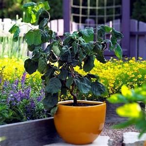 Plantes En Pot Pour Terrasse : fleurs et plantes pour balcon petit jardin et toit terrasse ~ Dailycaller-alerts.com Idées de Décoration