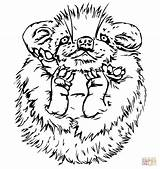 Porcupine Coloring Drawing Printable Line Porcupines Drawings Supercoloring Version Getdrawings Designlooter Categories 04kb 1040 1104px sketch template