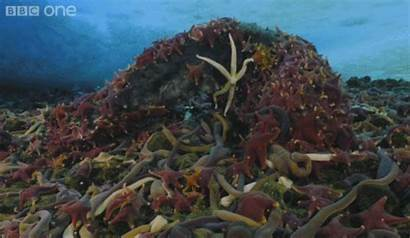 Gifs Starfish Eating Sea Whale Giant Mouthful