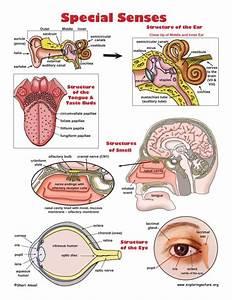 Human Anatomy Physiology Systems Blog