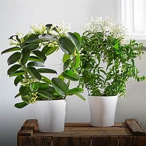 Marc De Café Plantes D Intérieur : conseils maison astuces et conseils maison botanic botanic ~ Melissatoandfro.com Idées de Décoration