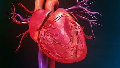 Heart Murmur Pathologic Test