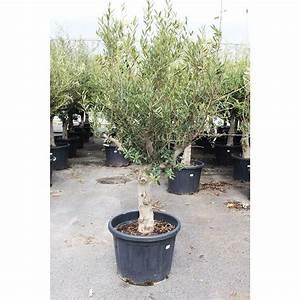 Plantes Et Jardin : olivier plantes et jardins ~ Melissatoandfro.com Idées de Décoration
