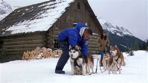 snow dogs full hd   torrent