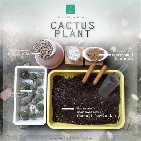 Mini3Garden - ดิน กระบองเพชร วัสดุปลูก เพาะ แคคตัส กระถาง ปุ๋ย หิน ไม้อวบน้ำ กุหลาบหิน ไลทอป สวน ...