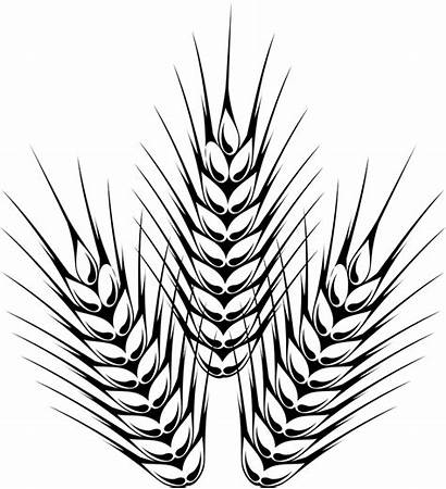 Barley Outline Beer Drawing Hops Wheat Clipart