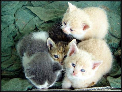 bureau d emploi 10 grands fonds d 39 écran pour de petits chatons animaux