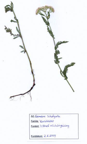 Nossos produtos são reconhecidos pela qualidade conheça toda a linha de produtos herbarium. Herbarium Deckblatt Vorlage Zum Ausdrucken