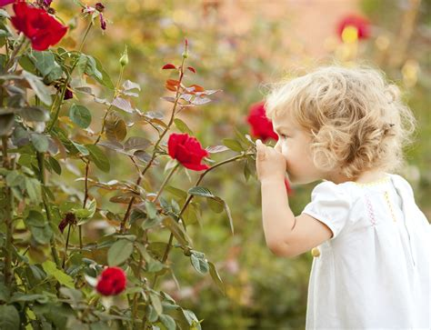 child roses beautiful child smelling rose