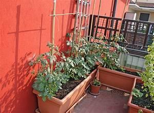 Gemüse Auf Dem Balkon : paprika auf dem balkon pflanzen wann wie ~ Lizthompson.info Haus und Dekorationen
