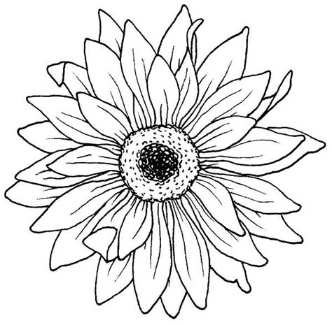 flowers drawings inspiration drawing blooming aster flower coloring pages bulk color