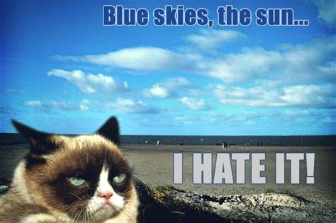 1000+ Images About Who Doesn't Love Grumpy Cat Lol On