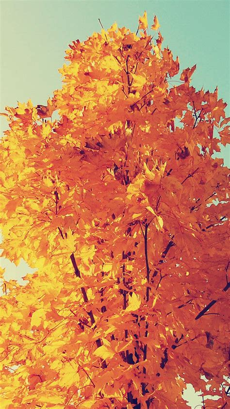 Autumn Wallpaper Iphone 8 Plus by Colorful Autumn Tree Leaves Iphone 6 Plus Wallpaper