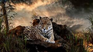 Jaguar Animal HD Wallpaper Welcome To StarChop