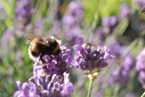 bee butterfly friendly gardening scottish nature notes