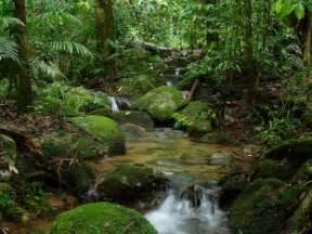 Tourism: Amazon Forest