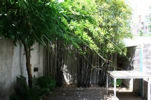 jardin des bambous un bambou pour chaque jardin page 2