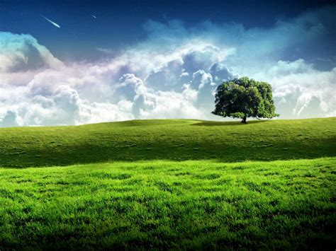 bliss tree green landscape scenery wallpaper