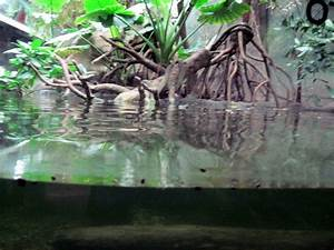 Lied Jungle-Asian Small-clawed Otter » Omaha's Henry ...