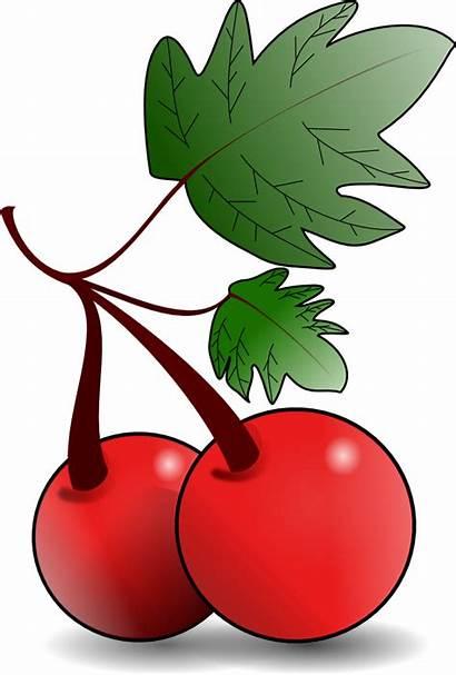 Fruit Clip Onlinelabels