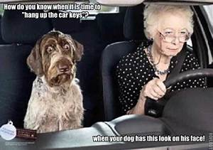 Funny Image Gallery: Funny Dog Pictures with Captions ...