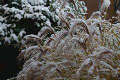 Winterharte Kübelpflanzen Als Sichtschutz : sichtschutz ~ Michelbontemps.com Haus und Dekorationen