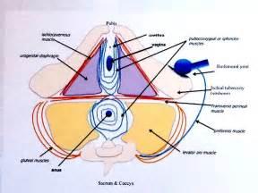 pregnancy pathway thru pregnancy 174
